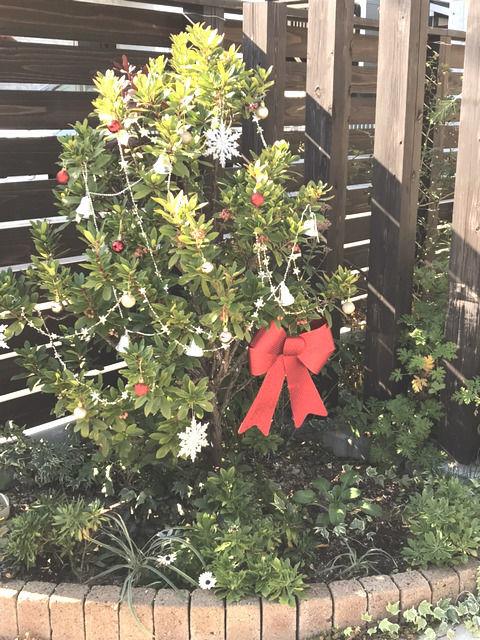 クリスマスの飾りと付けたイチゴノキ