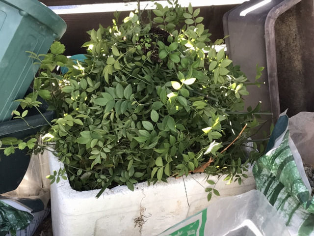 剪定した枝や葉でいっぱいのゴミ箱