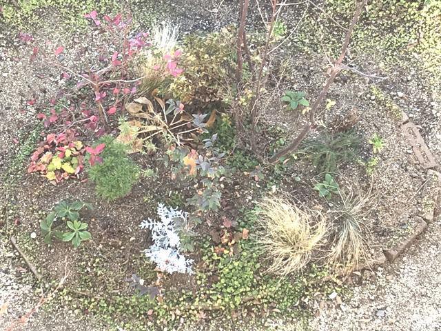 2019年12月の庭の様子エゴノキの植栽