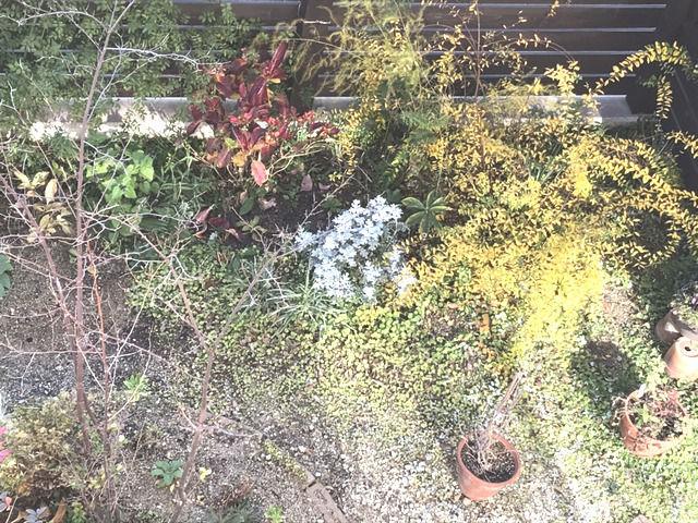 2019年12月の庭の様子板塀沿い