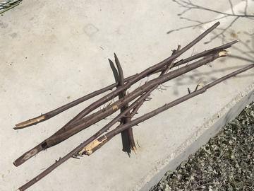 枯れたエゴノキの幹や枝