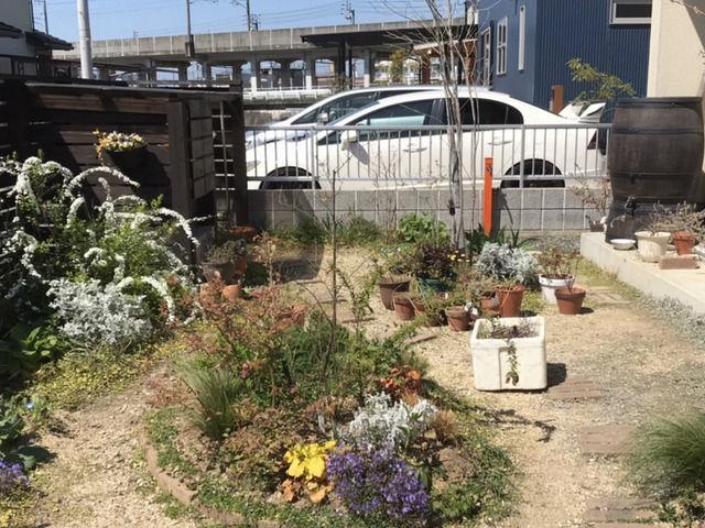 枯れた株を取り除いた後の庭全景