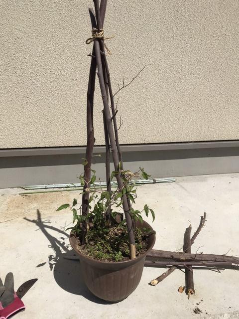 枯れた木で作ったクレマチスの添え木