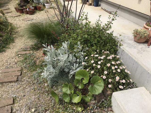 ジューンベリーの足元の植栽