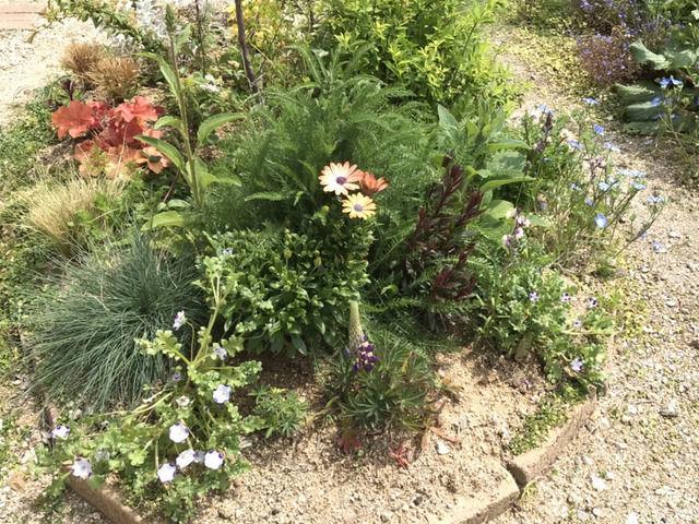 エゴノキの足元の植栽裏側