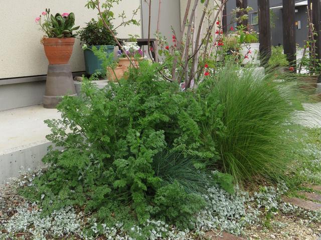 玄関先の植栽 ジューンベリー、オルレア、スティパなど
