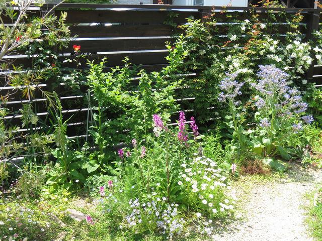 カクテルとモッコウバラが咲いた庭の様子