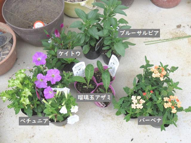 購入した夏の花