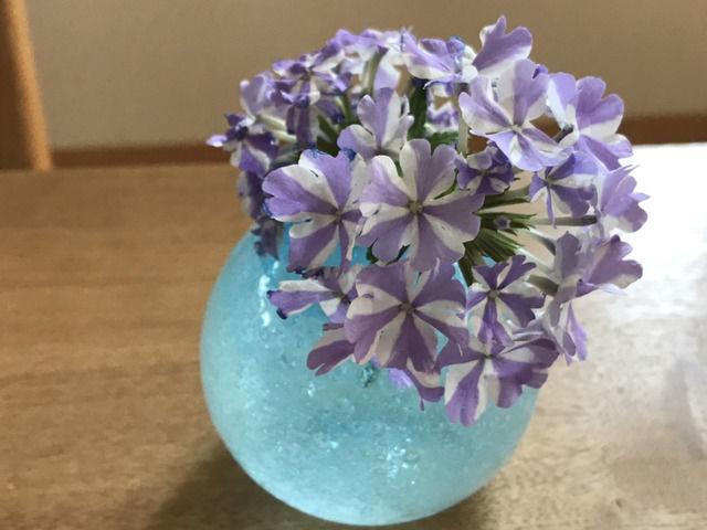 スーパーベナ アイストゥインクルの花の一輪挿し