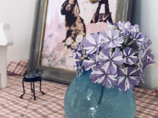 スーパーベナ アイストゥインクルの花