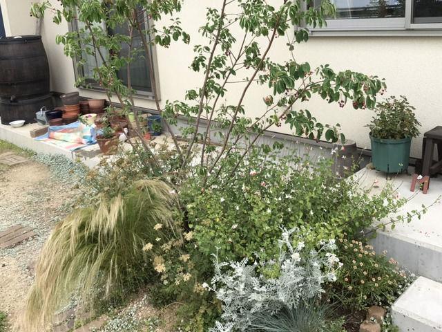 玄関前の植栽 スティパとジューンベリー