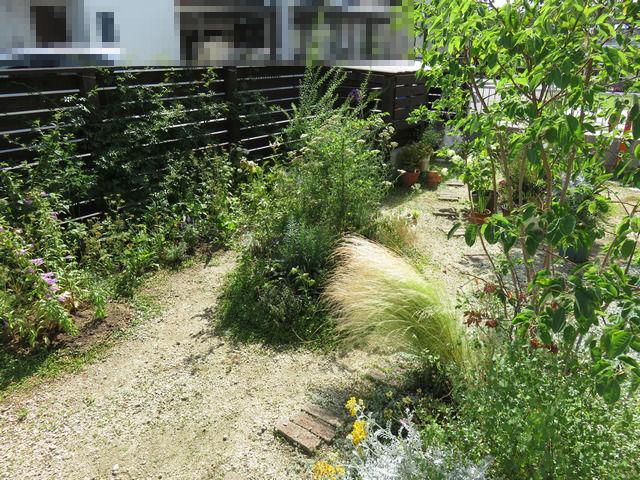 2020年6月の庭の画像