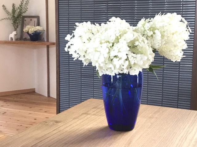 青いガラスの花瓶に生けた白いアナベルの花