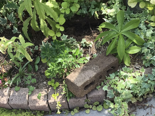 花壇から掘り出したレンガ