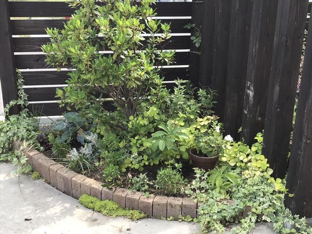 植え替えた後のコーナー花壇の様子・右側から