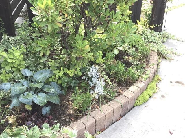 植え替えた後のコーナー花壇の様子・左側から