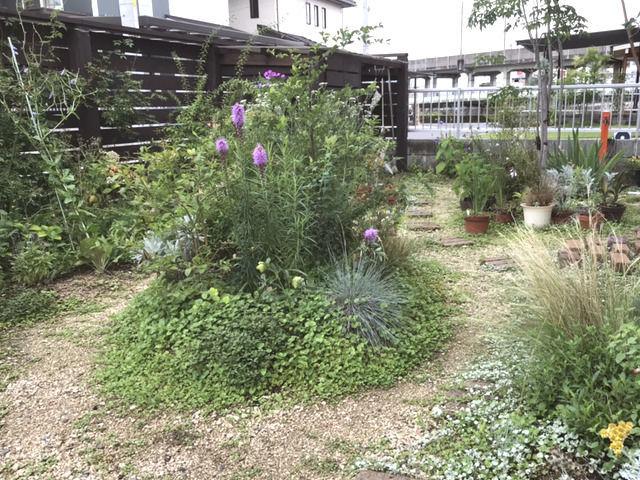 2020年7月の庭の様子