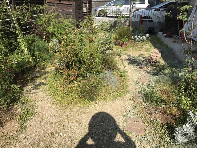 8月後半の朝9時の庭の様子