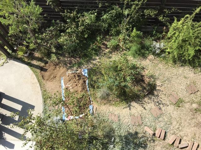 穴掘り作業の様子