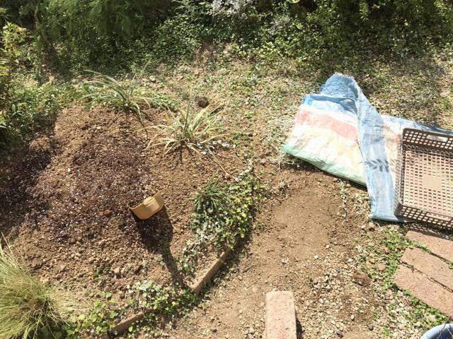 埋め戻した庭の穴