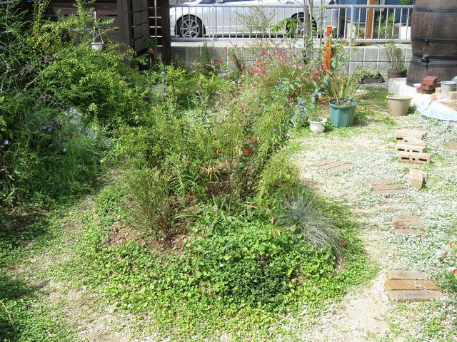 庭の様子 正面