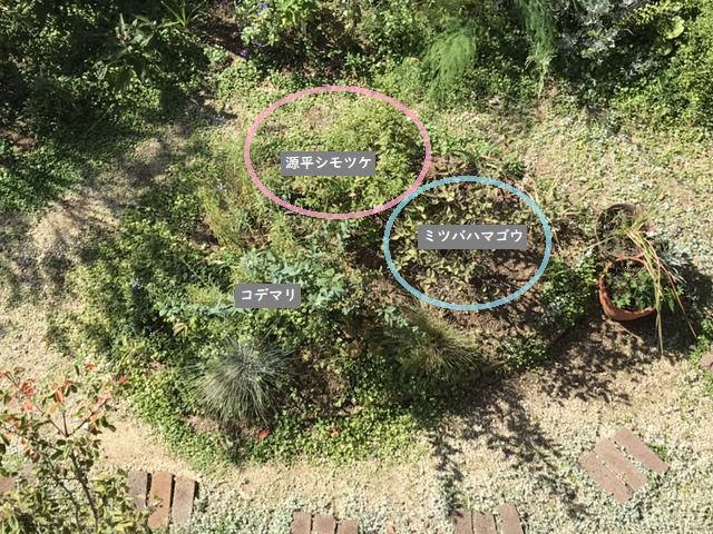 庭の様子 上から見た図