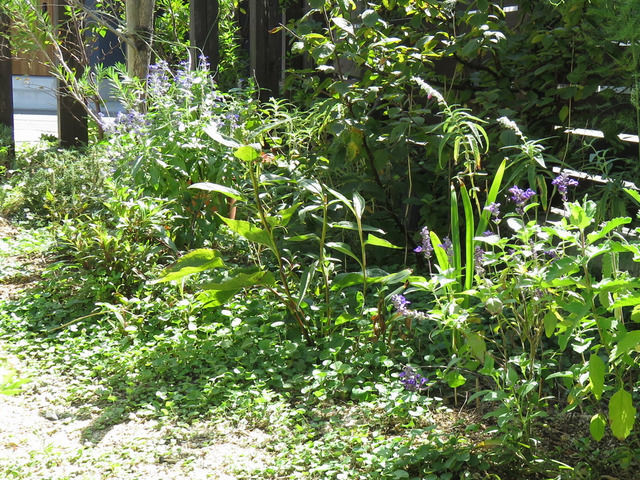 ブルーサルビアを植えた庭