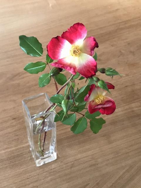 一輪挿しに生けたカクテルの花