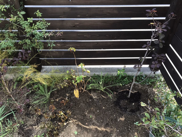 植え付け作業後の様子 スモークツリーベルベットクロークとアナベル