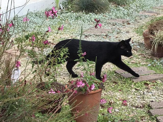 庭を歩くクロネコ