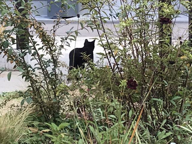 庭から出ていくクロネコの後ろ姿
