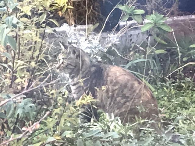 庭に来た猫の画像