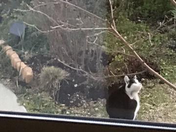 庭に現れた子猫の画像