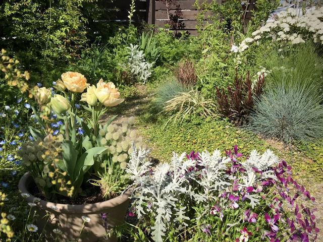 アンジェリケとラグラスの寄せ植えを置いた庭の様子