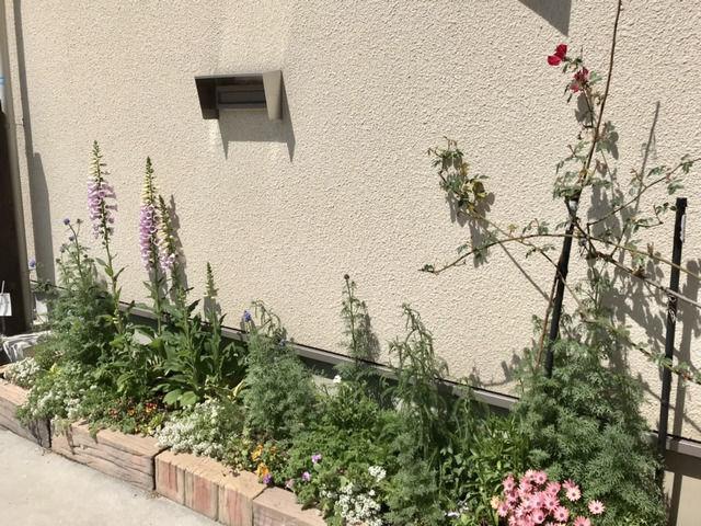 春の駐車場花壇の様子