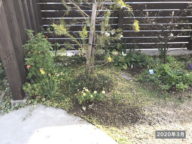 2020年3月の庭