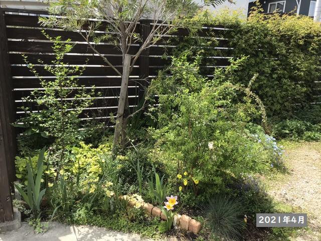 2021年4月の庭