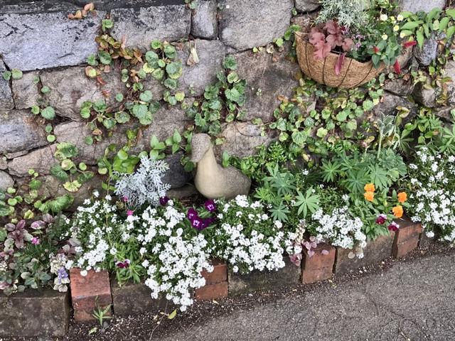 アンの庭の花壇