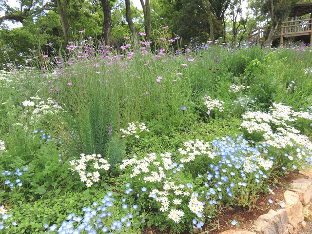 牧野植物園の花壇