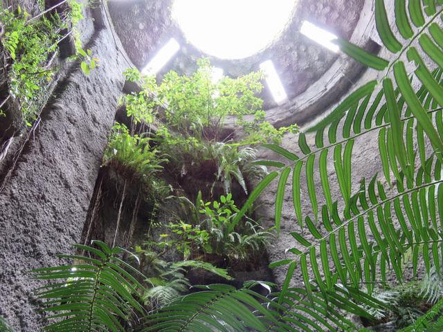 牧野植物園の温室内部