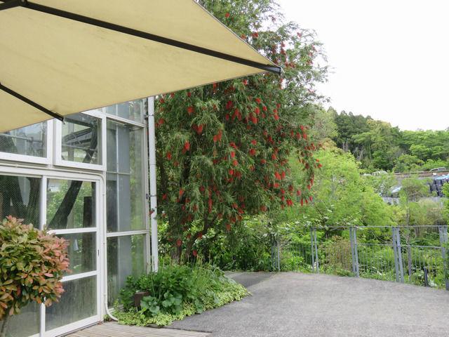 牧野植物園の温室