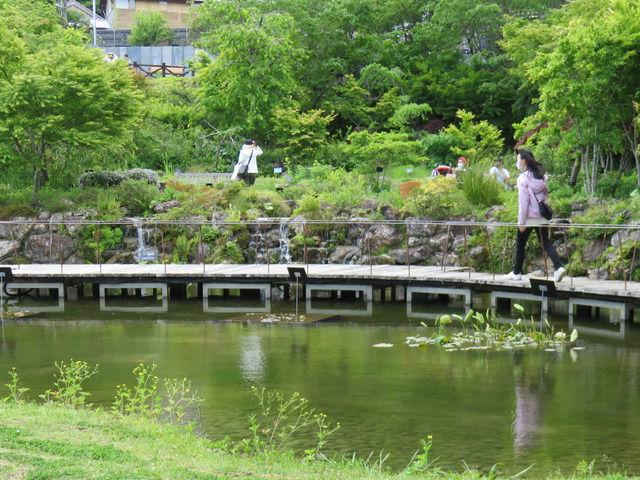 牧野植物園の池