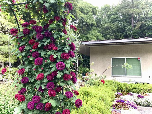 番の州公園のバラのアーチ