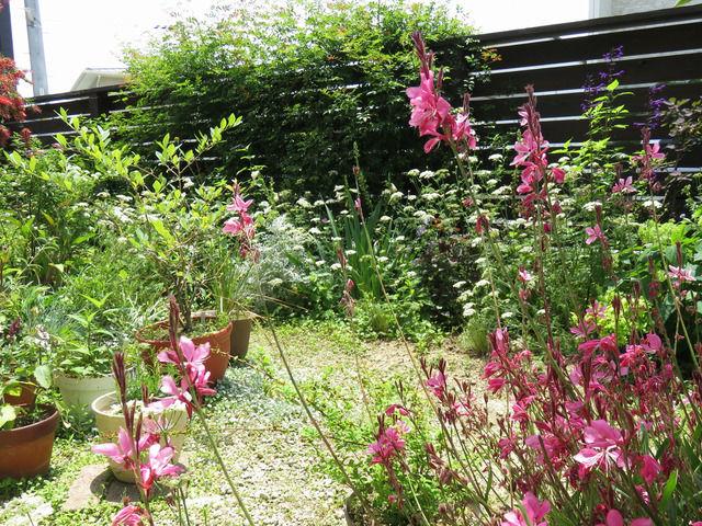 5月の庭の様子