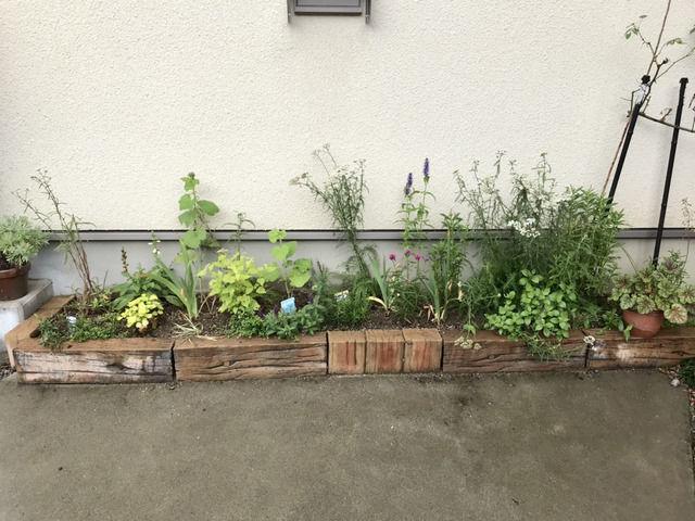 6月の駐車場花壇の全景