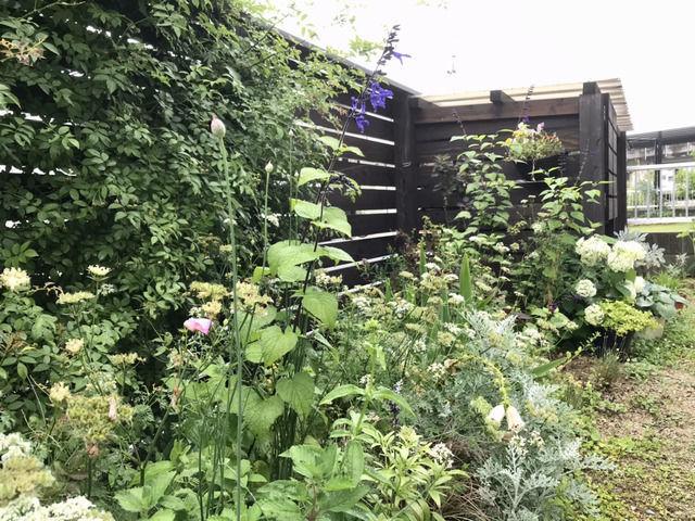 6月の庭の様子