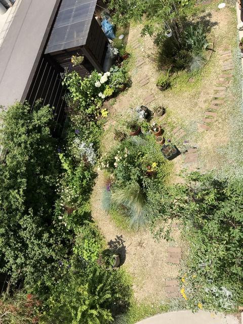 2021年6月の庭の全景