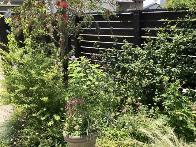 庭の入り口の様子