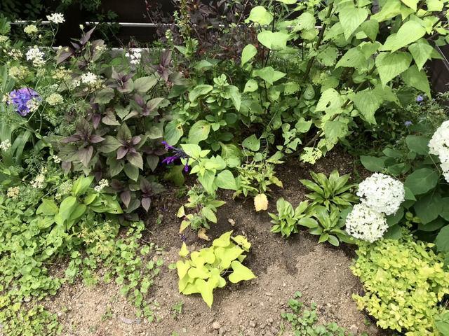 2021年6月の庭夏用に植えた苗