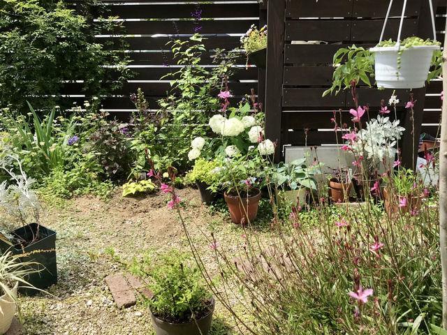 2021年6月の庭の様子